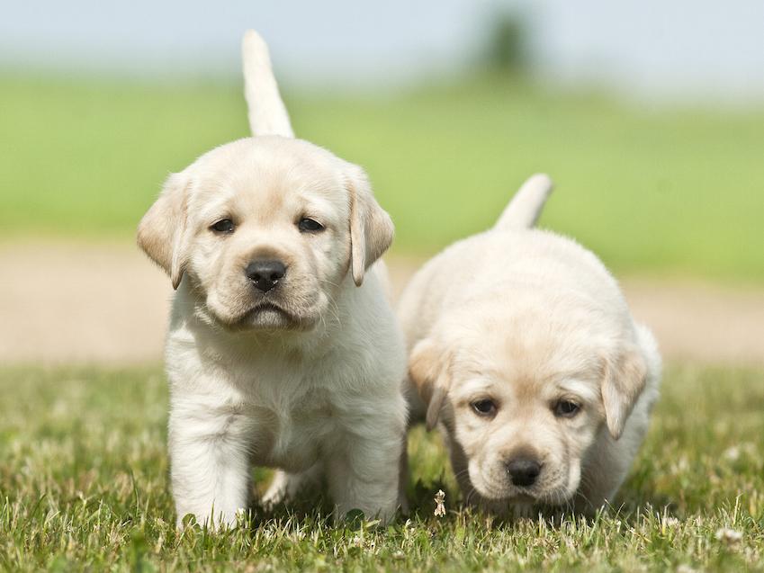 Hundezüchter-in-Deutschland