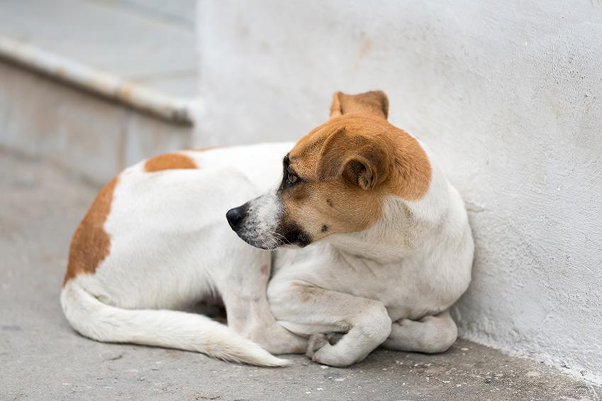 Ein Jahr mit den Straßenhunden von Güre