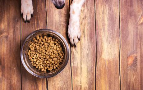 Die Inhaltsstoffe von Hundefutter