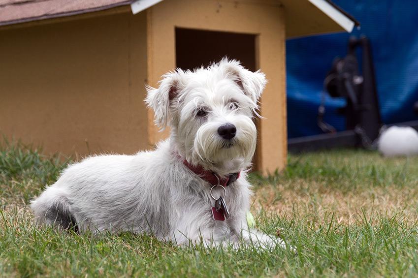 Hundeplatz im Garten
