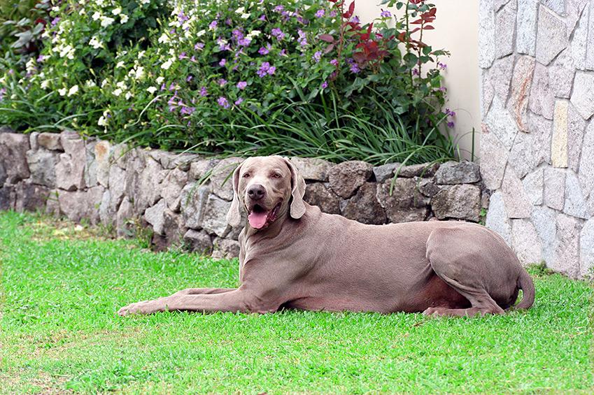 Hund-und-Garten