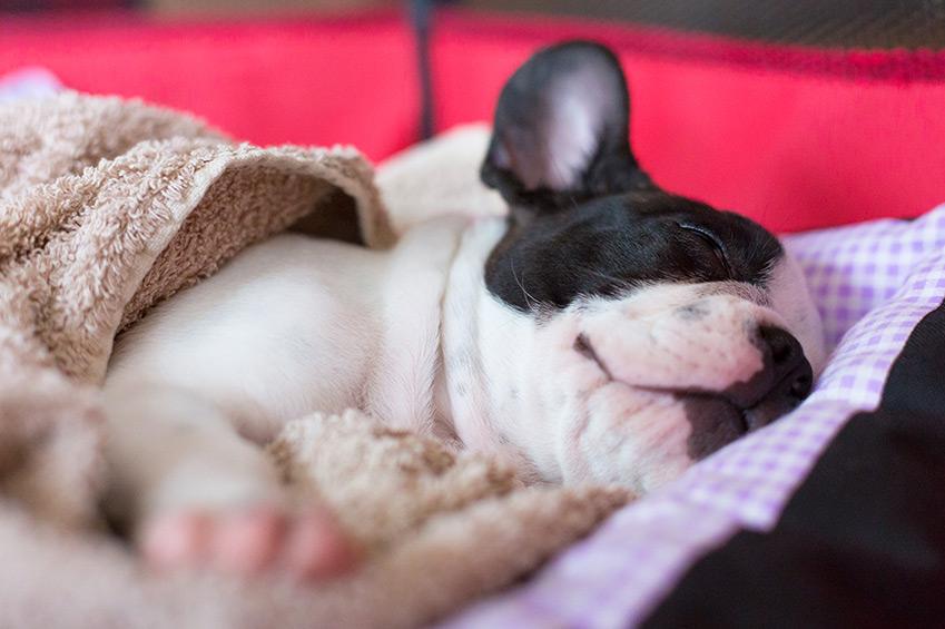 Schlafplätze-für-Hunde
