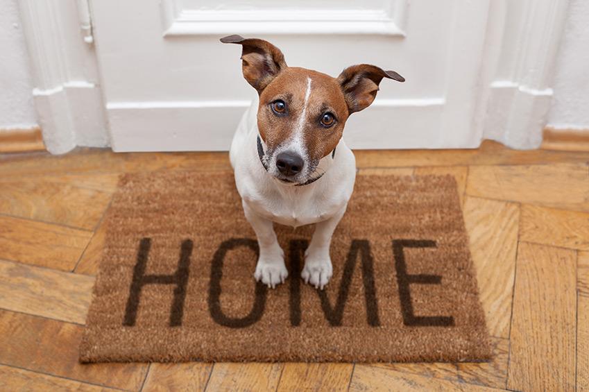Einen Hund gefunden - was nun?