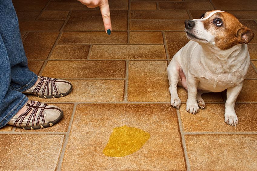 Inkontinenz bei Hunden, Unsauberkeit