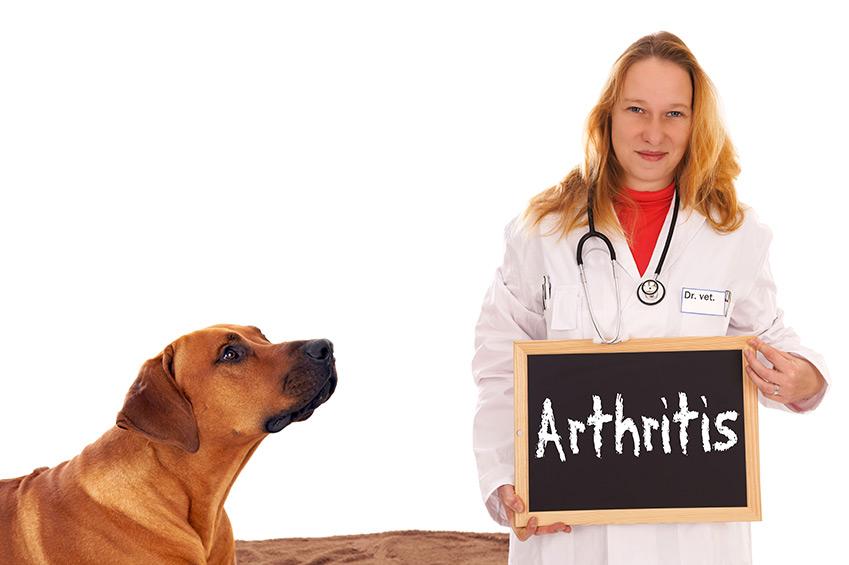 Arthritis beim Hund - Anzeichen und Ursache