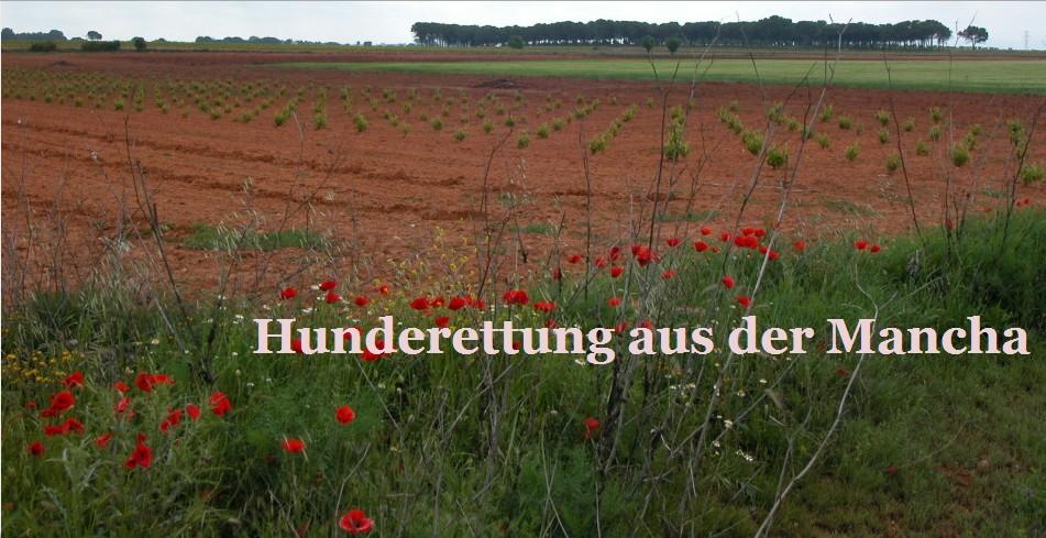 Tierheim Hage, Dornum