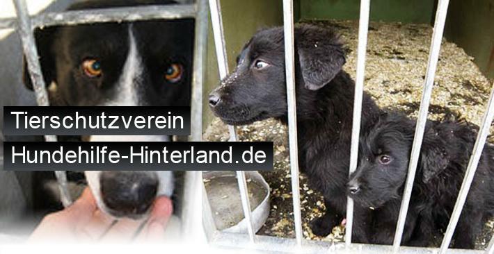 Hundehilfe Hinterland