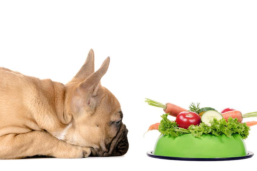 Darum brauchen Hunde Fett