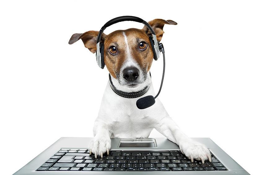 Hunde lernen sprechen