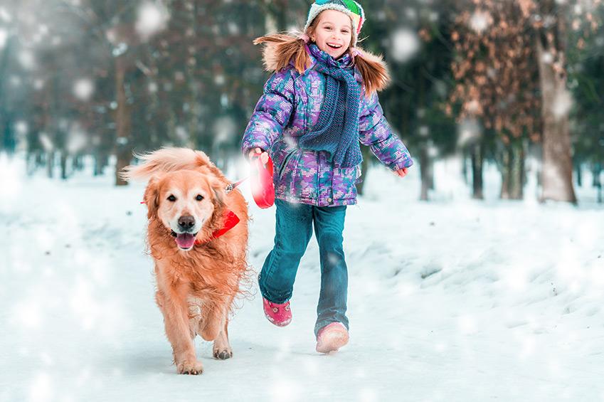 Kleine Checkliste für Hunde im Winter