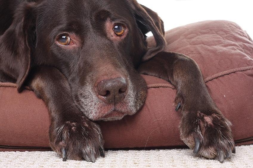 Einen Senior-Hund adoptieren