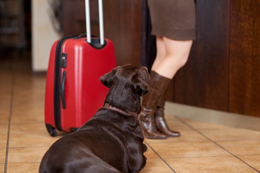 Ohne Hund in den Urlaub