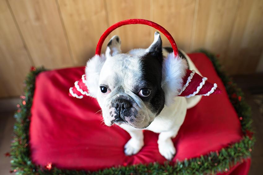 Tipps für ängstliche Hunde