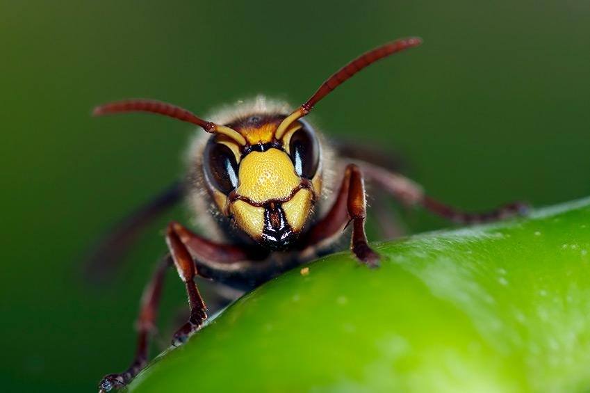 Auch Hunde werden heimgesucht: Bienenstich & Wespenstich