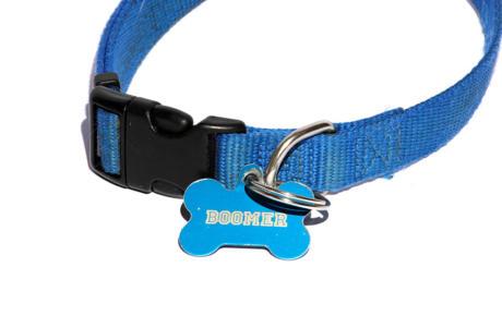 Sollten-Sie-den-Hundenamen-am-Halsband-anbringen