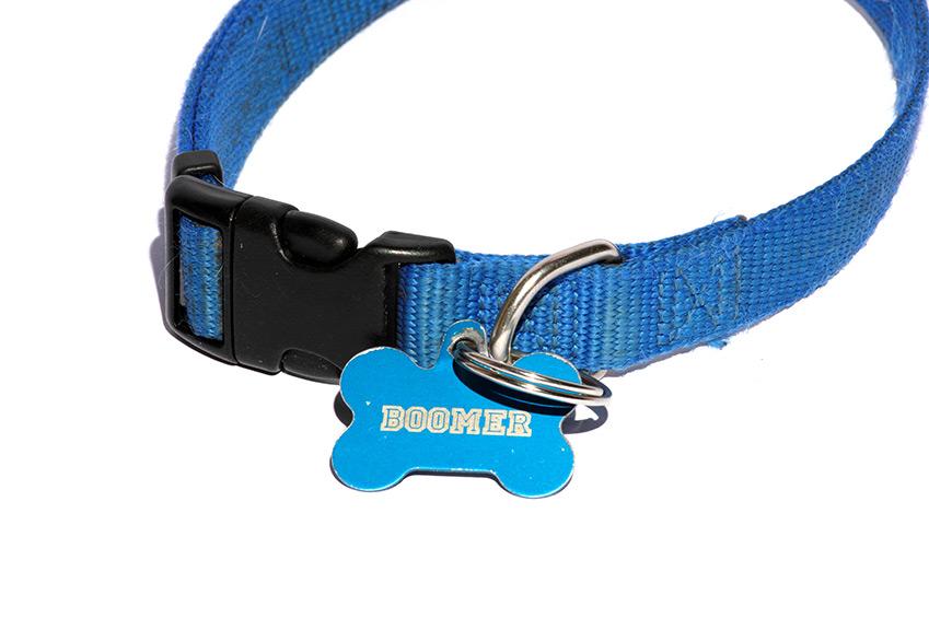 Sollten Sie den Hundenamen am Halsband anbringen?