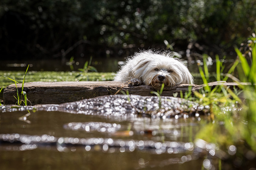 5 Tipps für einen gemütlichen Hundeplatz im Garten