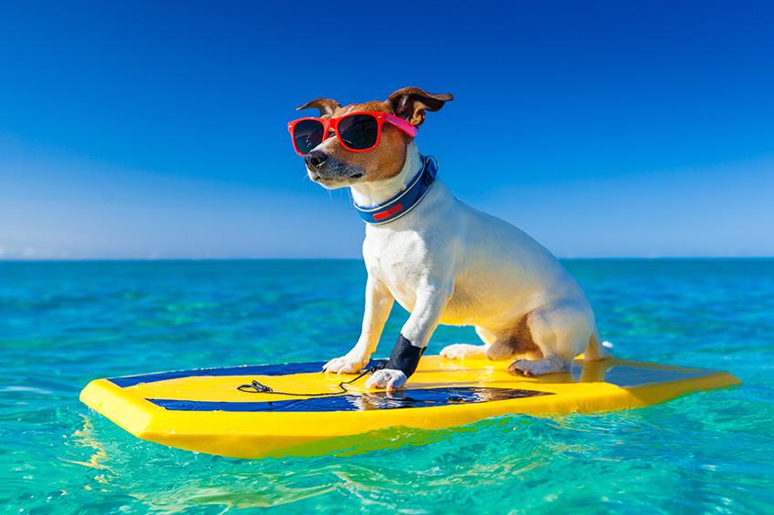 Ferien mit dem Hund - was müssen Hundebesitzer beachten?