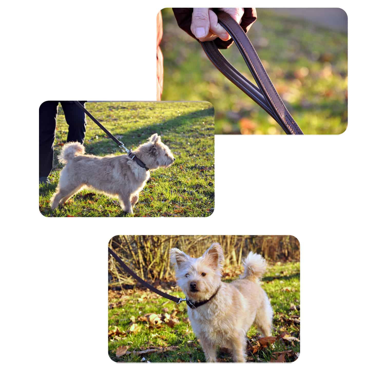 Hundeleine aus Leder - Anwendung