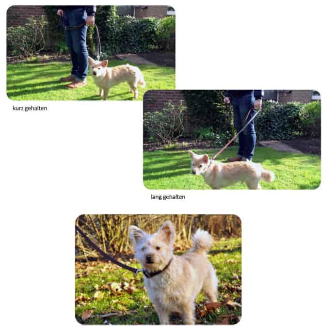 Hundeleine aus Leder - Trainingsleine - Längenvariationen