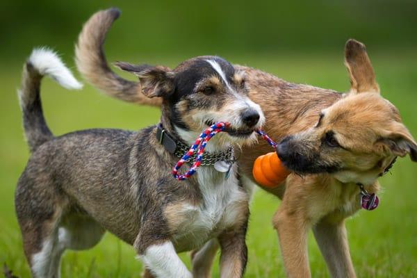 Hundespile