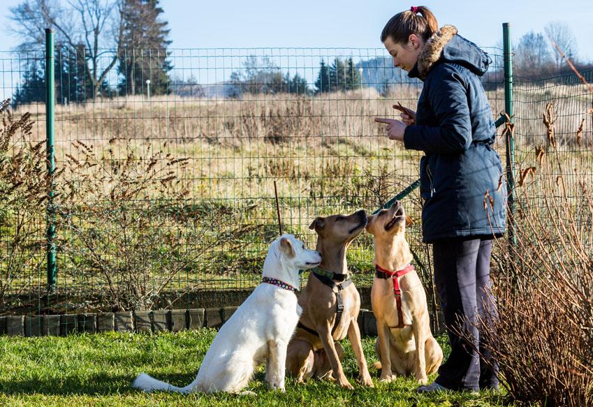 Hundeschulen und Hundetrainer