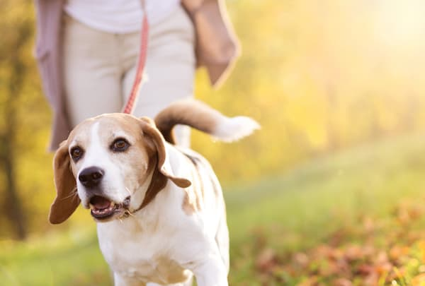 Mensch-Hund-Kontakt