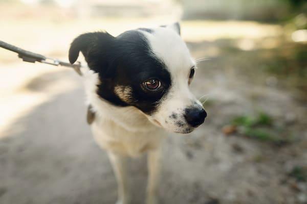 Warum beschnuppert ein Hund nur manche Personen