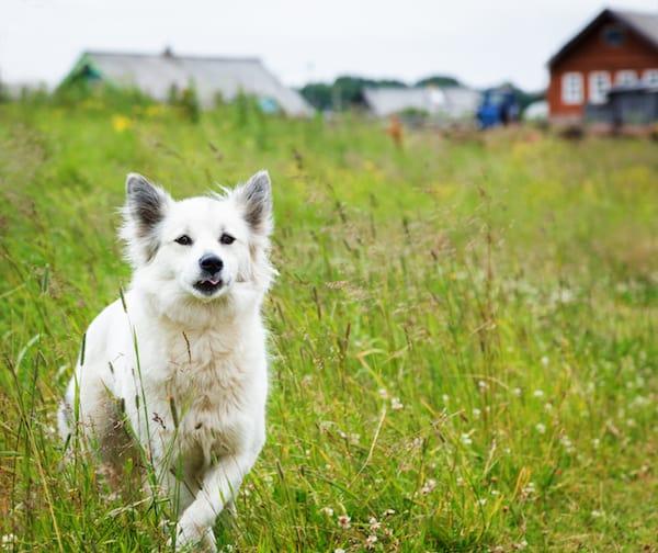 Warum versucht ein Hund wegzulaufen