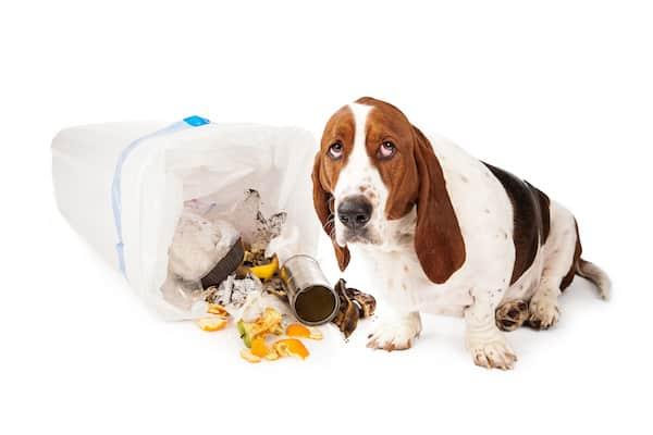 Warum wühlen Hunde im Müll