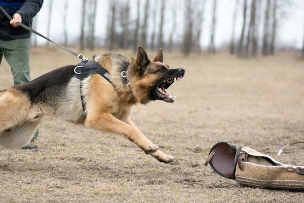 Warum werden Hunde aggressiv