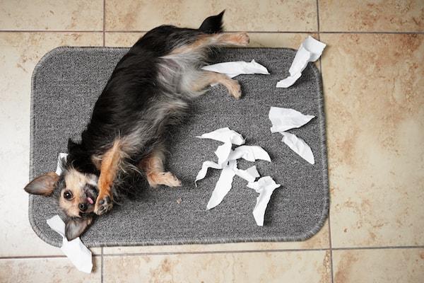 Hund und Papier