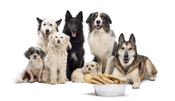 Überblick Hunderassen