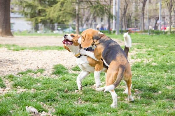 Hunde untereinander