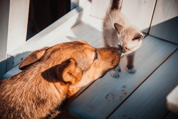 Hund kennenlernen