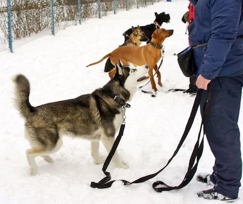 Hunde im Training