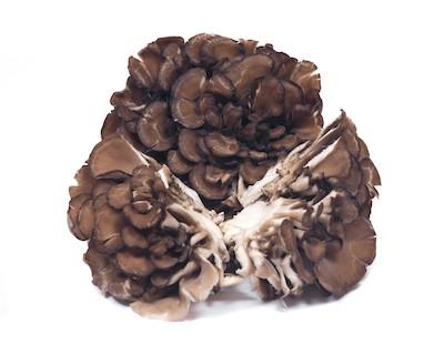 Beta-Glucan Pilz