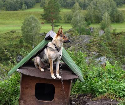 Ketten-Hund