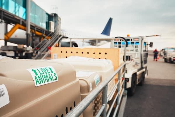 Dies Ist Ein Dachverband Der Von Fluggesellschaften Gegrndet Wurde Die IATA Gibt Regularien Vor Um Menschen Tiere Und Andere Fracht Sicher Ber