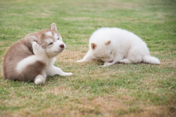 Warum schüttelt der Hund sein Spielzeug? Schnüffelfreunde