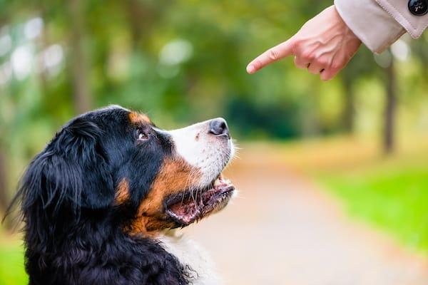 Dem Hund Nein beibringen