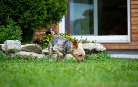 Hund sicher im Garten