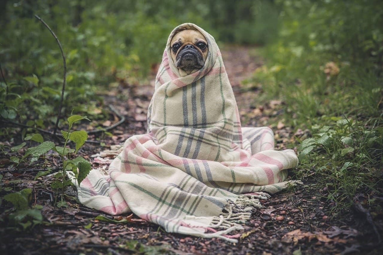 Hundedecken müssen regelmäßig gereinigt werden