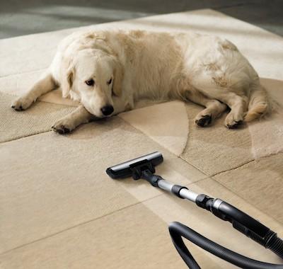 Hautpilz beim Hund, Hygiene