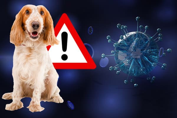 Hund und Corona Virus
