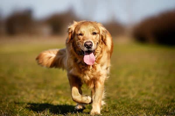 Erbrechen und Durchfall beim Hund
