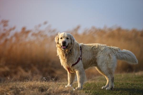 Erfahrung mit MSM beim Hund