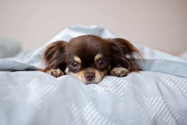 Darmverschluss beim Hund